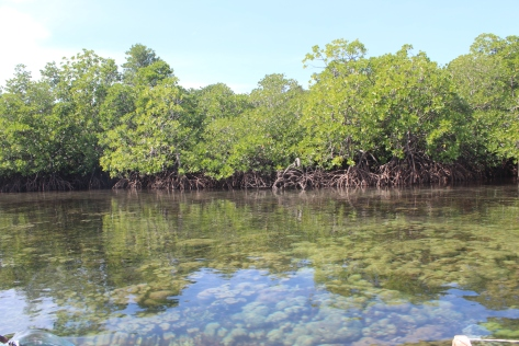 mangrove-seagrass-coral interconnectivity